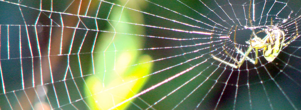 A world of dewdrops and spider webs.